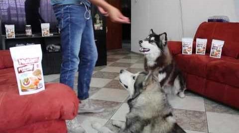Nutam Premios Para Perros