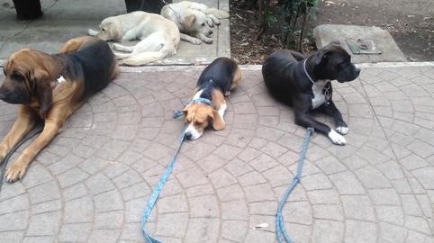 Perritos entrenados