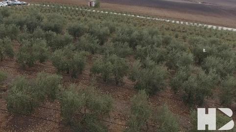 ARCO IRIS 1 desde el olivar os desean Unas Felices Fiestas!!Nuestro pequeno homenaje a los jornales andaluces! #CanalSur