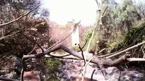 Vídeos de terror