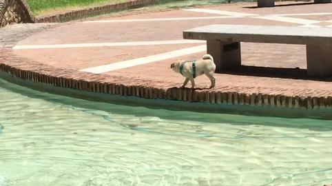 Lola se hinca en la fuente