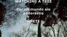 Isabel canta Watching a tree