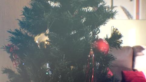 Trenzao - Nuestra navidad